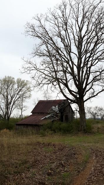 6 the barn