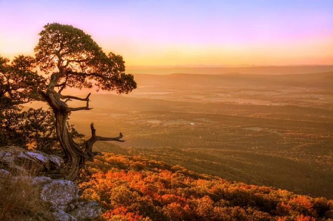 cedar-tree-atop-mt-magazine-arkansas-autumn-jason-politte